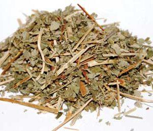 Agrimony (Agrimonia eupatoria) - Cut