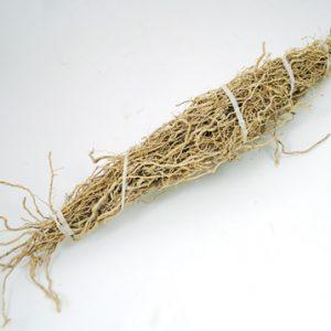 Patchouli Root 1 Root Bundle (Pogostemon cablin)